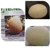 Tenemos semillas de melón