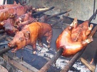 Vendo cerdos a la pulla