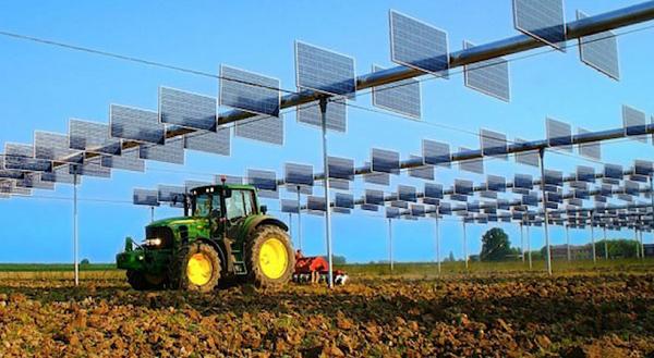 Agrofotovoltaica: agricultura entre paneles solares