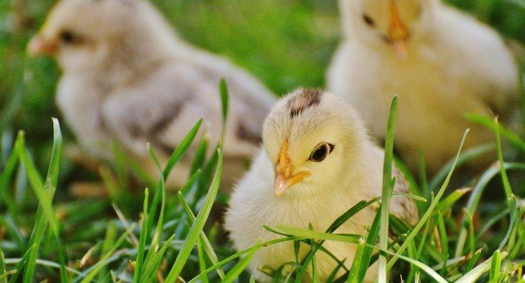 Consultorio nutricional: pollo con hormonas y falta de vitamina D