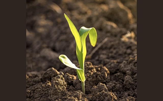 Cinco formas en que las plantas CRISPR pueden combatir el cambio climático