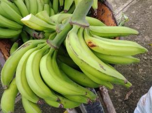 Se vende plátanos