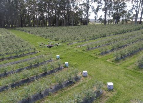 Crean radar para mejorar la polinización y aumentar los rendimientos en cultivos hortícolas