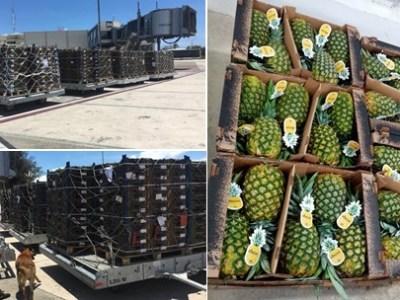 La piña de República Dominicana conquista nuevo mercado en el medio oriente
