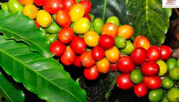 Finca en Neiba de Aguacate , Cafe y ganadera