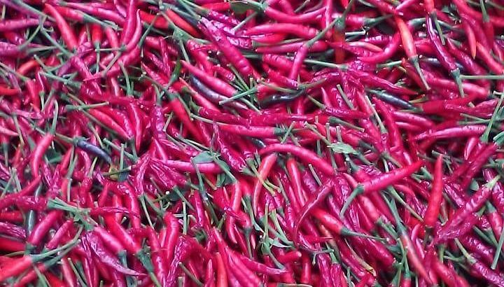 Aji thai chile