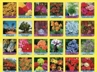 Semillas de flores para jardines