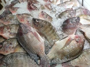 Pescados al por mayor
