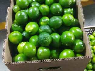Limón importado tahití