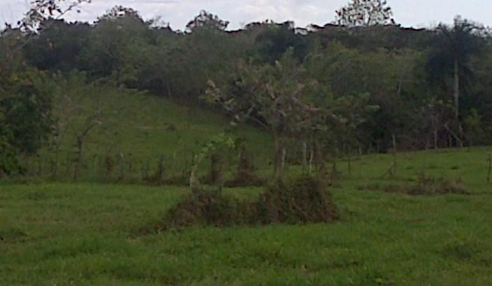 44,000 m² de Terreno en el Km. 25, Pedro Brand