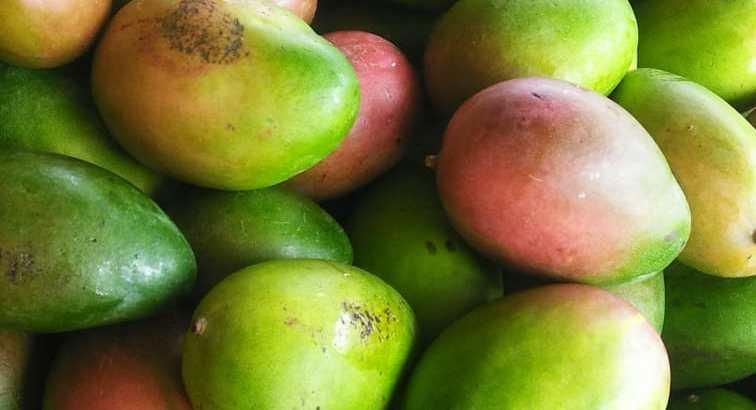 Mangos keitt por camiones