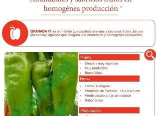 Semillas de aji cubanela
