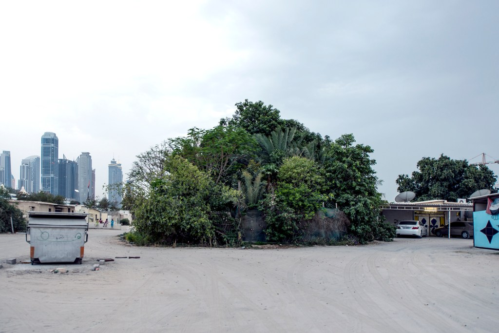 A Shabi houses enveloped by vegetation in the now defunct al-Shorta neighborhood in Dubai