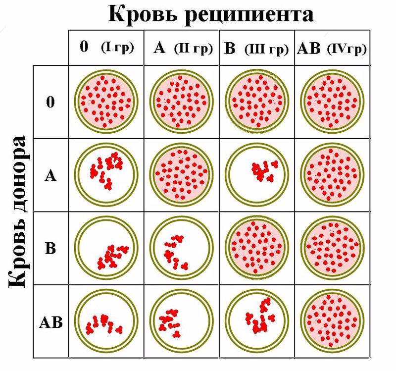 Ce trebuie să știi despre grupa de sânge A2 – frecvență și compatibilitate cu alte grupe