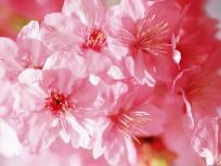flores-6229