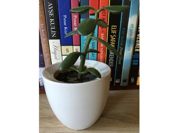 desk plants writers