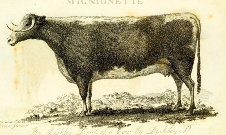 diario de otro hombre aburrido que mira una vaca