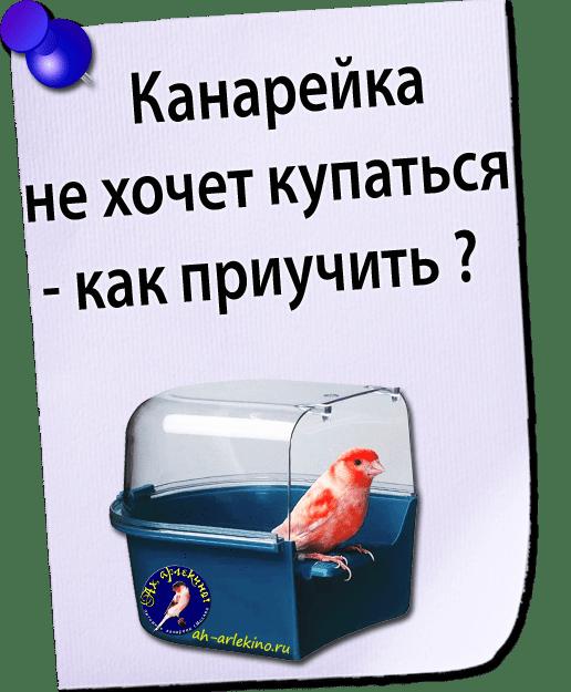 канарейка не купается