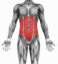 core-muscles-highlighted