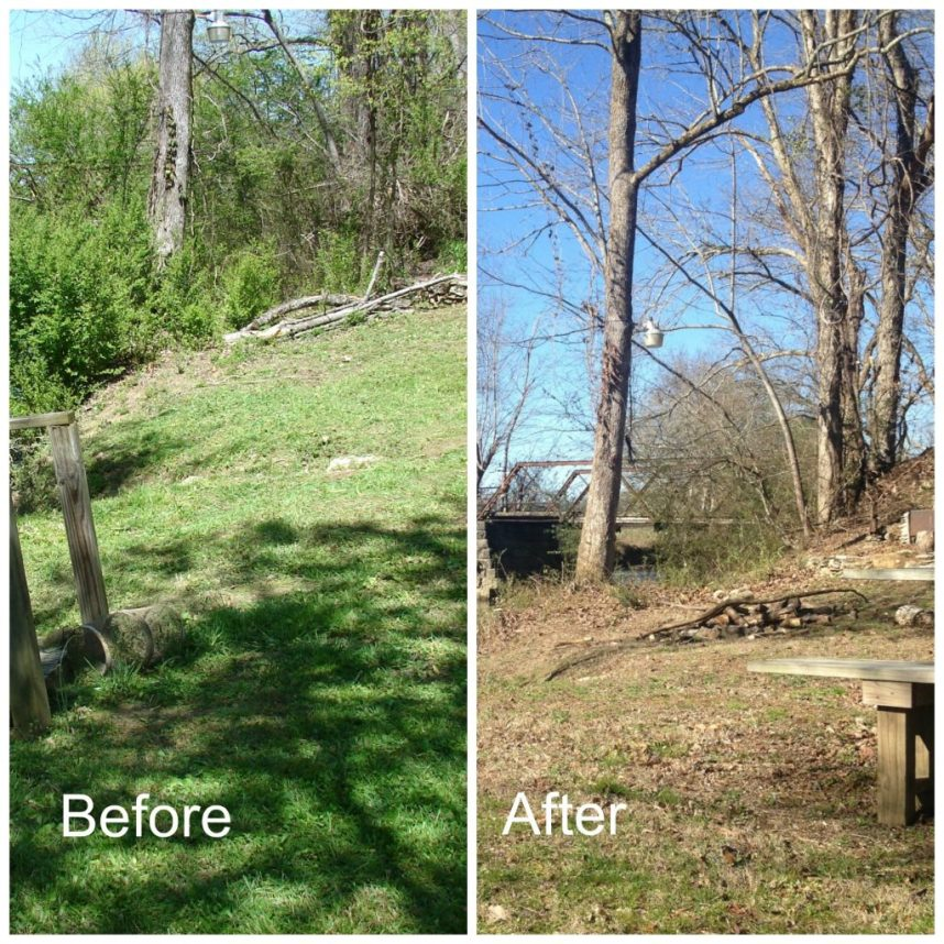 landscape spring clean up