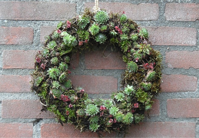 Image Of A Wreath Made From Succulents Plants