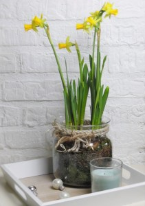 Narcissus Spring bulbs