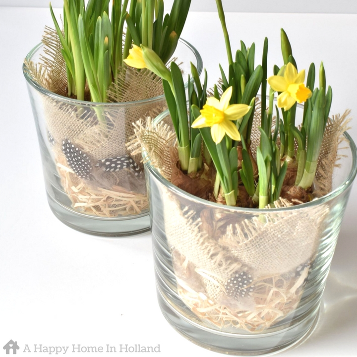 DIY Spring Bulb Plant Arrangement Easy budget home decor idea for the Spring and Easter period.