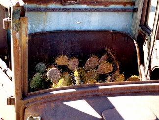 Cacti in the front seat