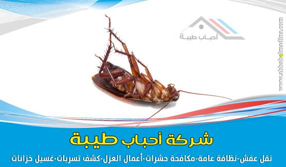 صورة شركة مكافحة الصراصير بالمدينة المنورة