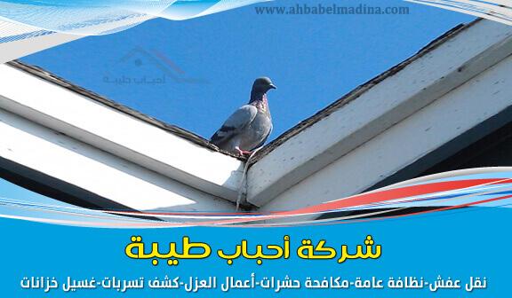 تركيب طارد الحمام بالمدينة المنورة ومكافحة الحمام في البيوت وتركيب طارد الطيور