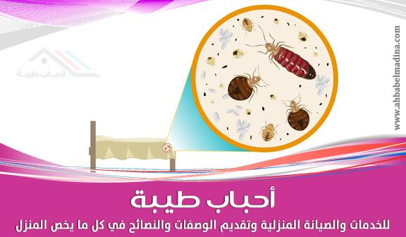 صورة طرق تساعدك في التخلص من حشرات الفراش