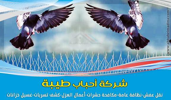 صورة شركة تركيب طارد حمام بينبع وبالمدينة المنورة