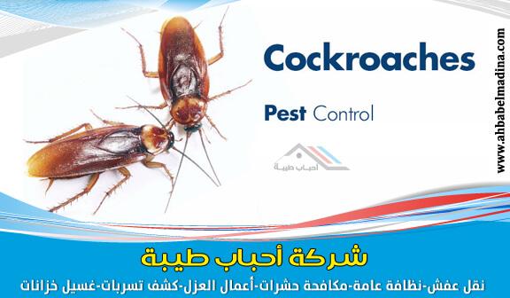 Photo of شركة مكافحة الصراصير بجدة ورش صراصير
