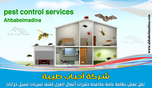 صورة شركة مكافحة حشرات بالقطيف بجودة عالية