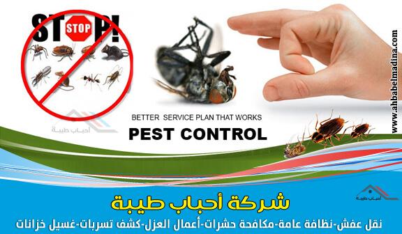 شركة مكافحة حشرات بالقصيم ورش مبيدات ببريدة وعنيزة + الرس والبكيرية