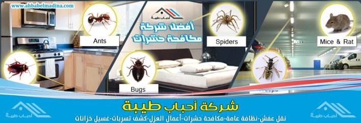 شركة مكافحة حشرات بالباحة + بلجرشي + المخواة ومكافحة النمل الابيض بخّصم 20%