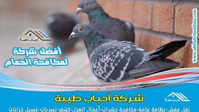 Photo of شركة مكافحة الحمام بالدمام & أفضل سعر شركات طرد الطيور