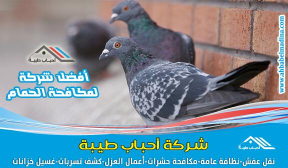 صورة شركة مكافحة الحمام بالدمام & أفضل سعر شركات طرد الطيور