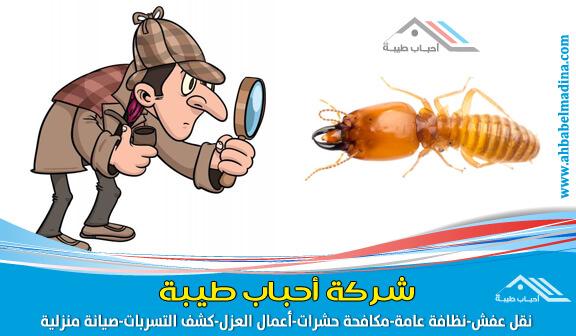 صورة شركة مكافحة النمل الابيض بالاحساء والمنطقة الشرقية