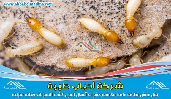 مكافحة النمل الابيض بالاحساء والمنطقة الشرقية عن طريق أفضل شركة رش مبيدات