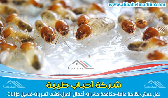 صورة شركة مكافحة النمل الابيض بالقطيف ورشه بمبيدات مستوردة