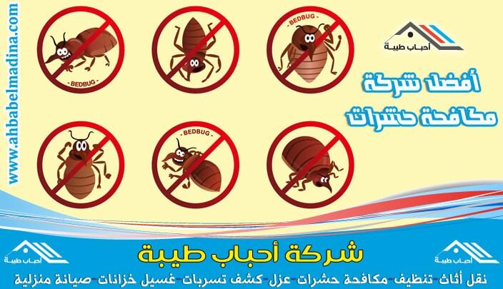 Photo of شركة مكافحة البق بالاحساء ورش بق الفراش