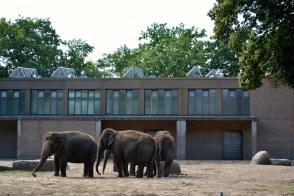 elefante zoo berlin Barbara Poplade Schmalz©