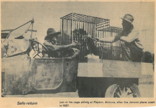 Photo from newspaper article about Leo the Lion (Jackie) arriving in Payson, Arizona, after his rescue from the Arizona desert. Box 1, Martin Jensen papers, American Heritage Center, University of Wyoming.