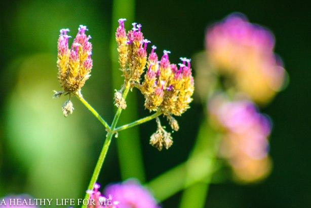 Seed Gathering and Saving Tips | ahealthylifeforme.com