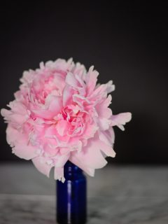 Peonies; A Love Affair