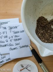 yarrow seeds ready to be placed in envelopes to be stored_
