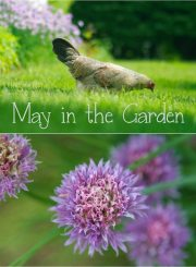 Gardening in month of May | ahealthylifeforme.com