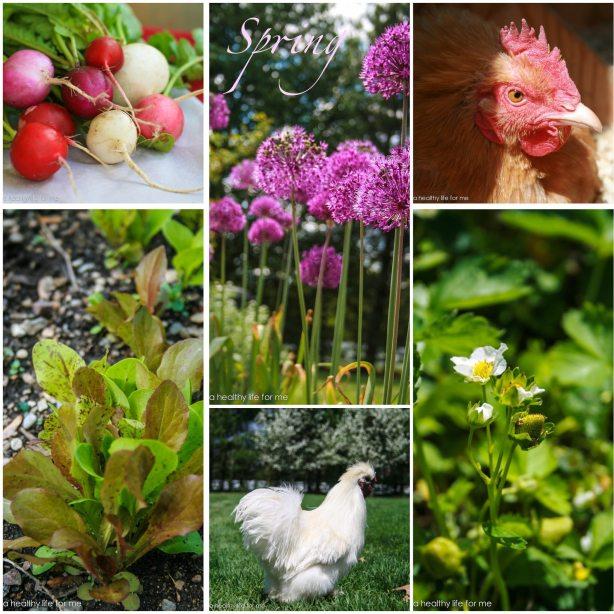 Spring Garden 11