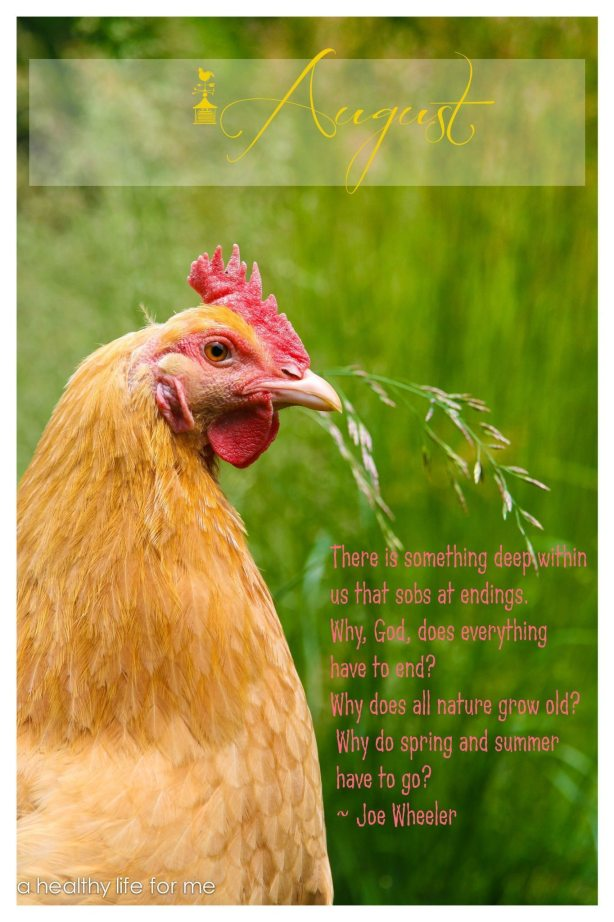 August cover with Buff Orpington Hen